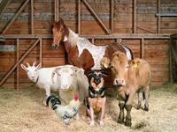 Ветеринарная служба Крыма приняла участие в проверке соблюдения правил содержания животных гражданами
